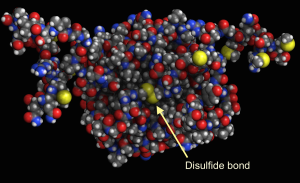 Disulfide bond between two protein chains. Image made in Molecule World.