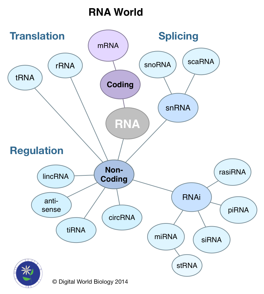 RNAworld2014
