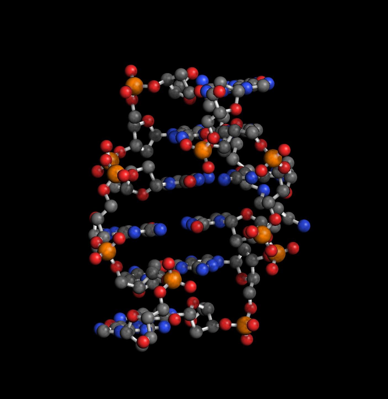 Z-DNA