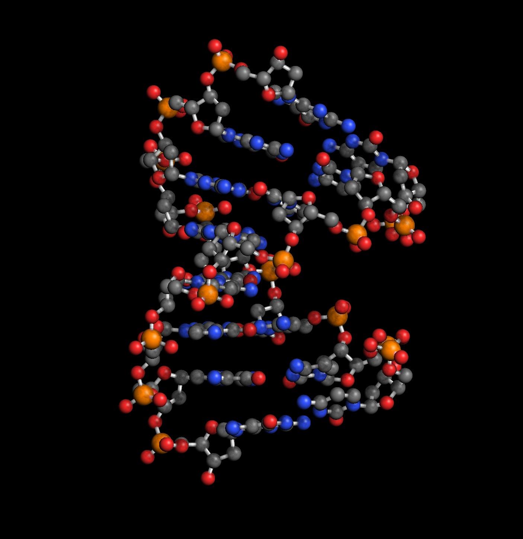 A-DNA