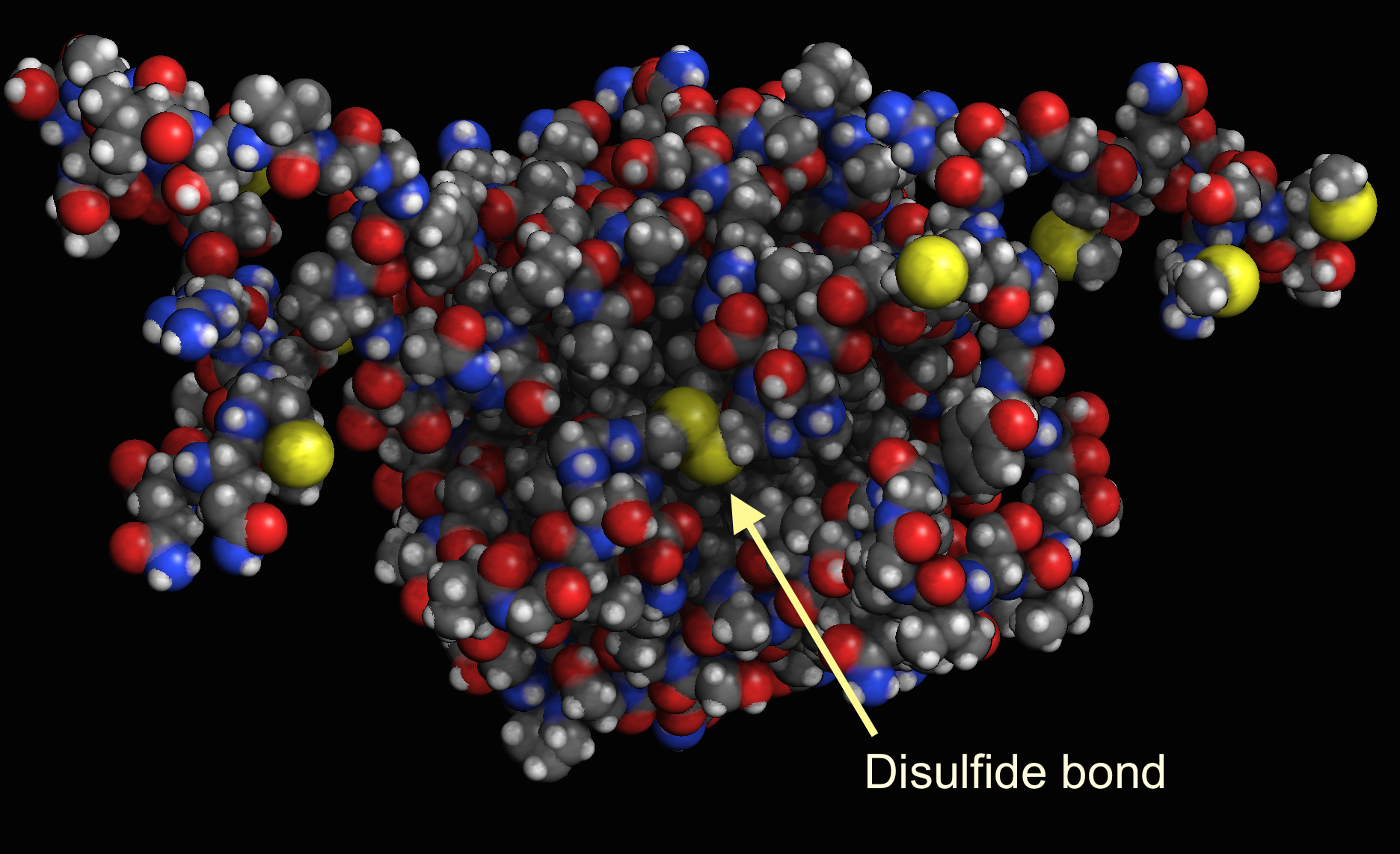 Disulfide bond between two protein chains.Image made in Molecule World.