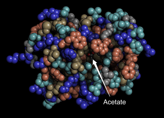 Crotoxin colored by hydrophobicity with acetate bound in the active site.