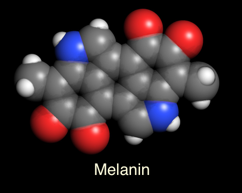Melanin in Molecule World