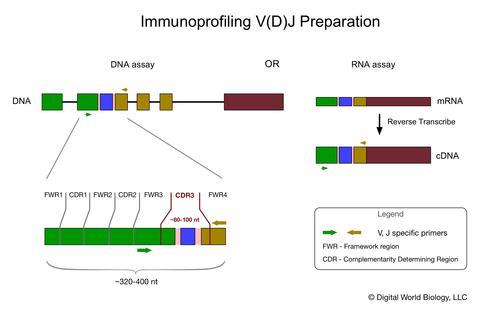 Immunoprofiling sample preparation