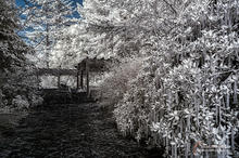 Infrared of Ballard Locks entrance
