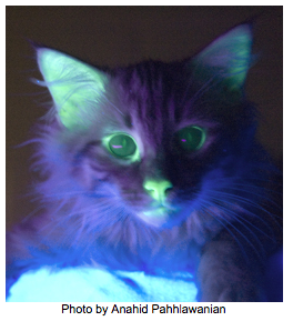 i-0b222d43f3c5438ae19683f6dfc43841-glowing_kitty.png