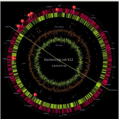 i-2264d56c83be1fce26f2af3423daa466-E_coli.png