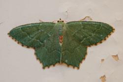 i-36631ebf661c6cf805d95af38def01cd-moth.jpg