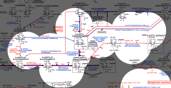 i-3a7bb9be84716deb6a79542b0bdfdd42-pathways.png