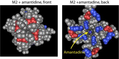 i-3a948b7820bbf9f8dd21213c4ba2d010-m2-and-amantadine.png