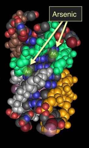 i-59c9cac84cd36b0e9011e419c74586cf-arsenic_DNA_quadraplex.png
