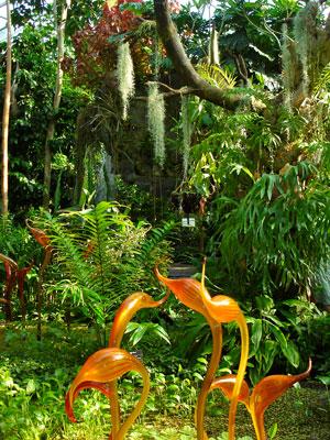 i-6c045143b4f7ae358bd9e89759c830b0-tropical_garden.jpg