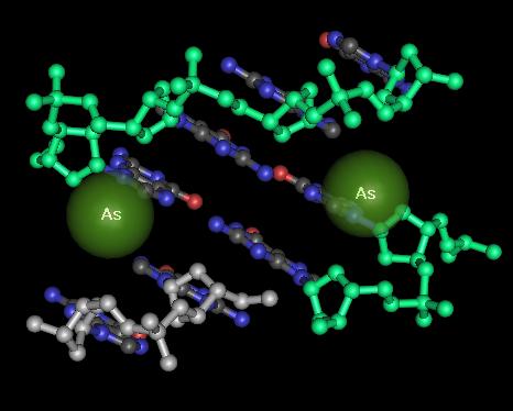 i-6dd4107ef76a4ef33230855becba547a-arsenic_DNA.png