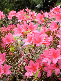i-8295f915da92d0ca11a67cd144057d90-rhodies.jpg