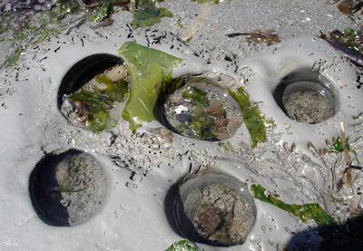 i-af23682c42d2b455682c6cbe5201285c-clams.jpg