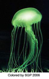 i-b1e041868f26a9b705c4fa3f58d6a63f-jellyfish_green.jpg