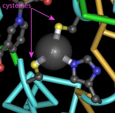 i-b2f7832f5a011d214c00d376e6168a71-cysteines_zinc.png