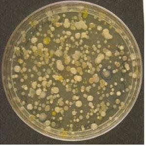 i-baa7f5842895316e8e0aa50f7b4ae8c8-creek_bacteria.jpg