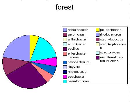 i-cf4dcb38959c9040fd2bbd873267bdaf-forest_1.png